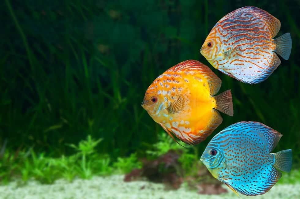 Lower pH in Aquarium