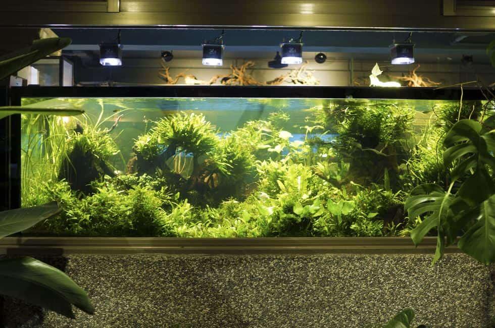 Aquarium Plants for Beginners