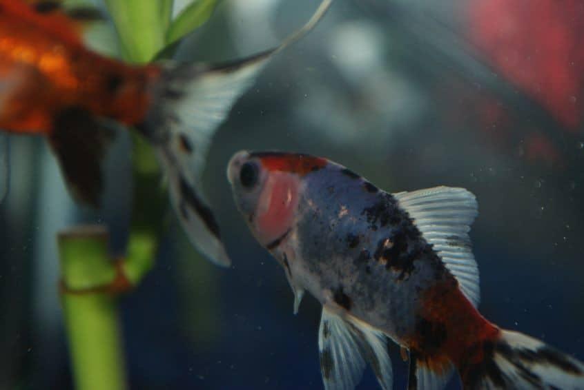 Is Bamboo safe for aquarium?