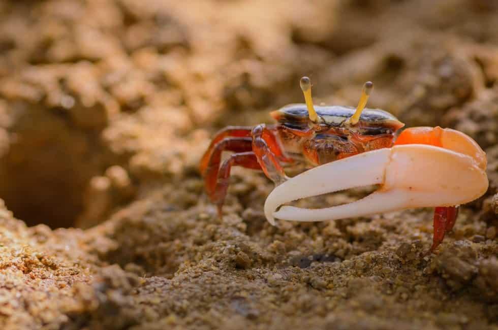 Freshwater Aquarium Crabs