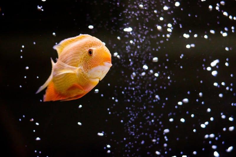 fish tank oxygen