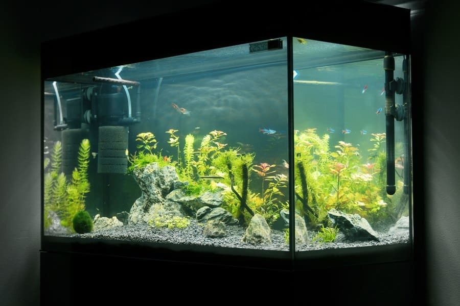 Acrylic vs Glass Aquarium